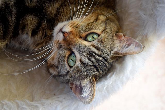 Cat, Sweetness, Animal, Feline
