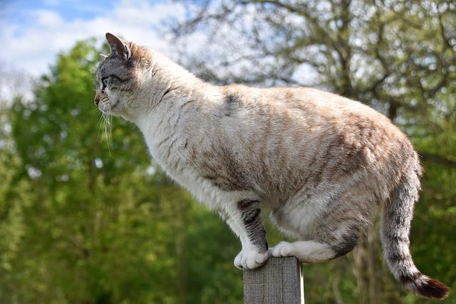 Cat, Pussy, Feline, Cat Walker, Balance, Cat On Pole
