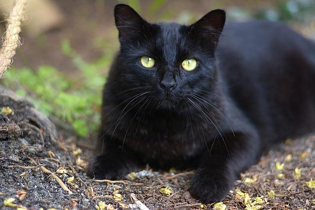 Dark, Nature, Cute, Mammals, Cat, Feline