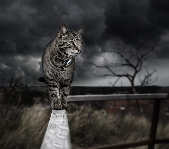 Photo Manipulation, Cat, Photoshop, Handling, Feline
