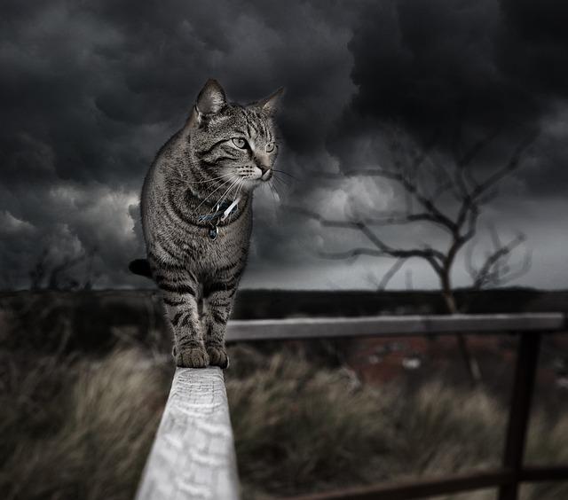 Photo Manipulation, Cat, Photoshop, Handling, Feline