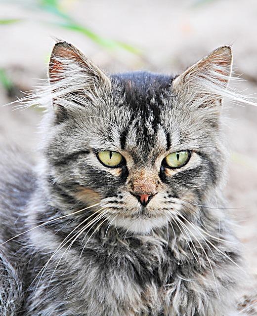 Cat, Angry Cat, Pet, Kitten, Feline, Domestic, Funny
