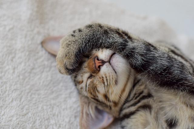 Cat, Pet, Feline, Animals, Kitten, Asleep