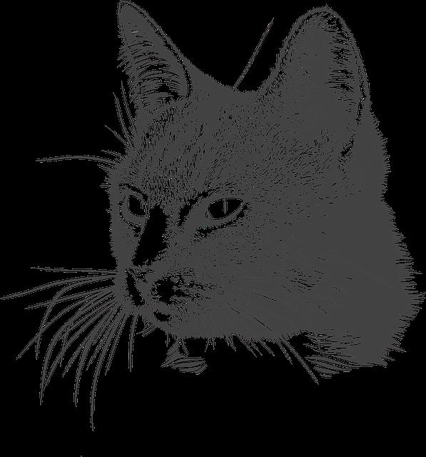 Cat, Kitty, Head, Domestic Animal, Matou, Feline