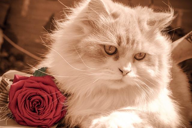 Kitten, Cat, Rose, Pet, Feline, Kitty