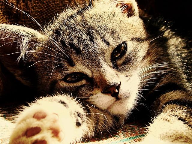 Kitten, Rays, Sunny, Sad, Feline, Muzzle