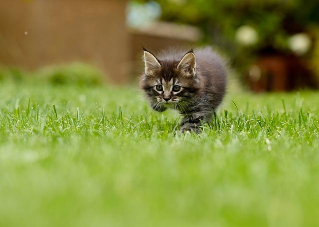 Cat, Animal, Tame, Feline, Pussy, Predator, Head, Cute