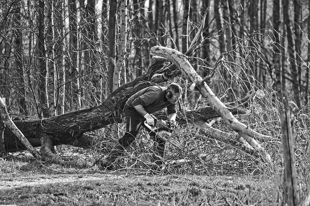 Man, Person, Feller, Tree Feller, Forest Worker