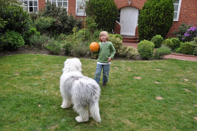 Boy, Dog, Ball, Cute, Bobtail, Child, Young, Fellig