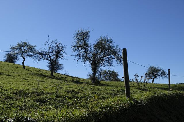 Meadow, Fence, Barbed Wire, Nature, Pasture, Landscape