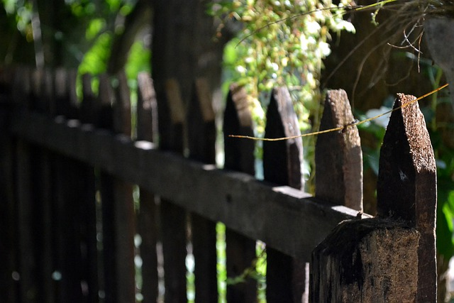 Fence, Leading Line, Morning Time, Fresh, Sri Lanka
