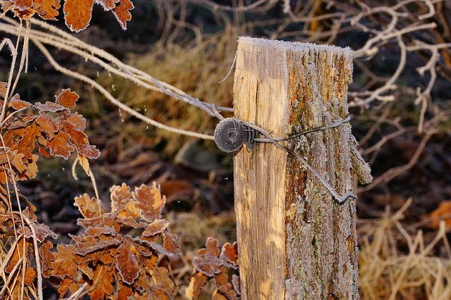 Pasture, Fence Post, Wooden Posts, Demarcation, Iced