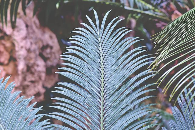 Fern Fern Leaf, Wedel, Fern Plant, Fiddlehead