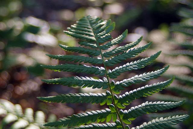 Fern, Undergrowth, Polypody, Fern Leaf, Fern Flower