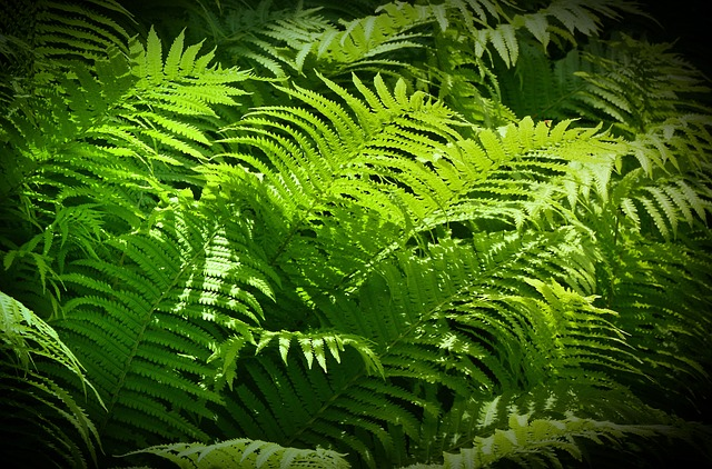 Ferns, Green Stuff, Sunbeam, Fruitful, Lush, Growth