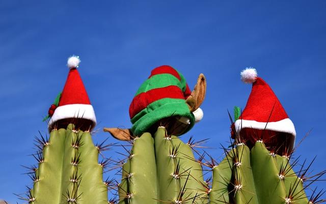 Cactus, Christmas, Holiday, Festivity, Festive