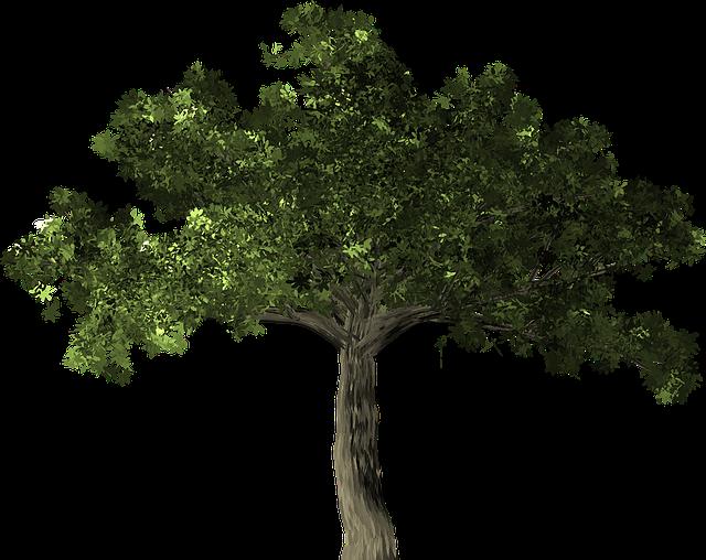 Ficus, Tree, Plant, Ficus Microcarpa, Banyan