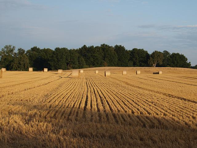 Straw Bales, Field, Straw, Agriculture, Round Bales