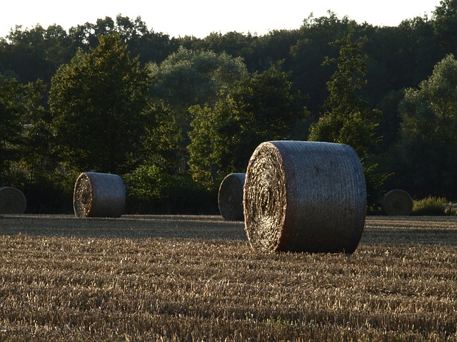 Straw Bales, Harvest, Field, Straw, Agriculture