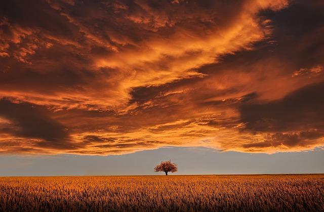 Tree, Field, Calm, Tranquil Scene, Beautiful, Clouds