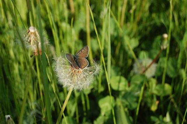Nature, Field, Butterfly, Prato, Fields