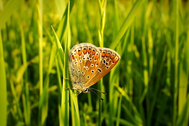 Nature, Lawn, Summer, At The Court Of, Field, Butterfly