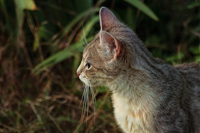 Nature, Animal, Cute, Mammal, Outdoor, Cat, Field