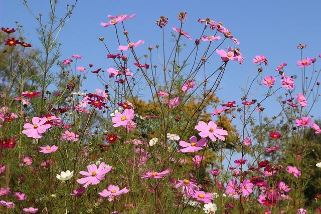 Fleurs Des Champs, Pink, Field, Color, France, Fields