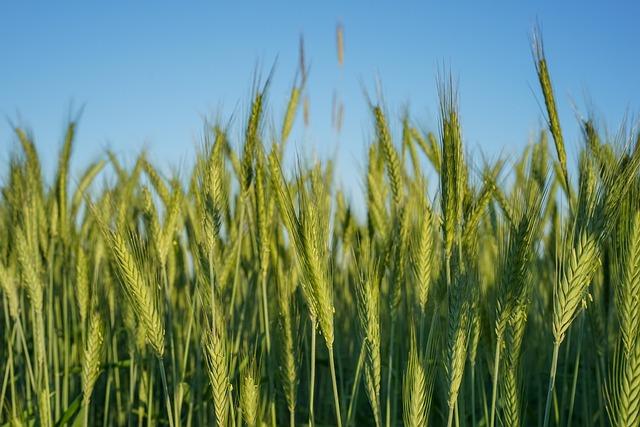 Agriculture, Barley, Crops, Farm, Farmland, Field
