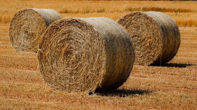 Straw, Hay, Nature, Agriculture, Farm, Field, Rural