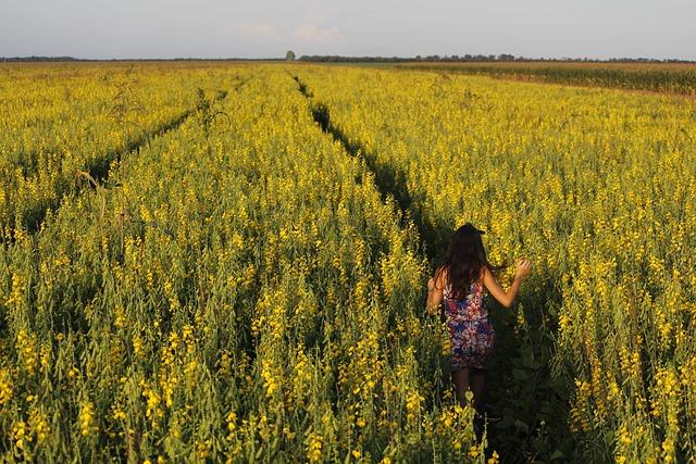 Crotalária, Field, Crop, Brazil, Farm, Mato Grosso