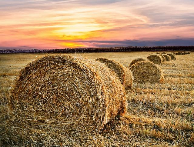 Hay Bale, Countryside, Farm, Rural, Field, Hay