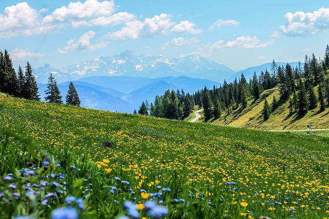 Yellow, Field, Flowers, Meadow, Mountain Meadow