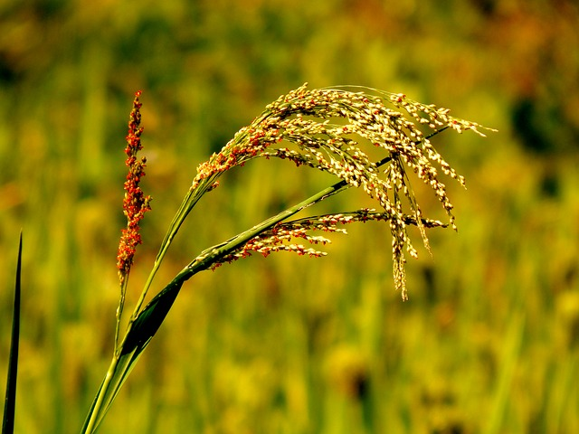 Agriculture, Crops, Field, Fields, Green, Plant
