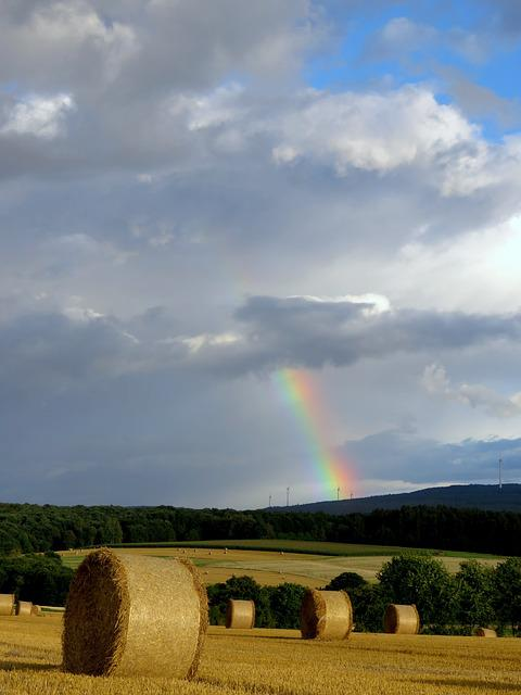 Rainbow, Color, Field, Harvest, Agriculture