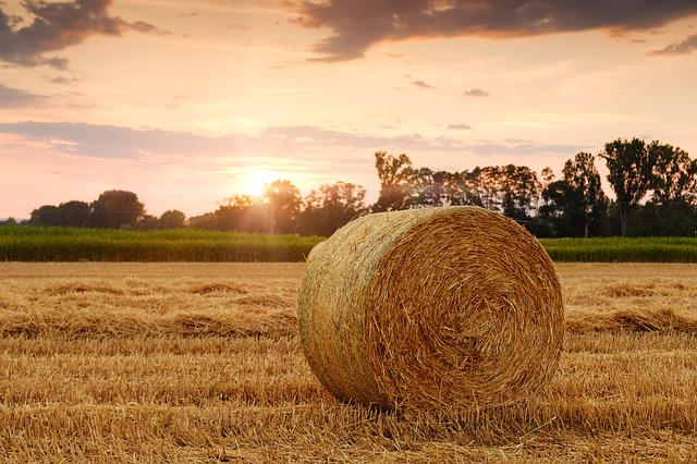 Field, Hay Bale, Sunset, Wheat Field, Agriculture
