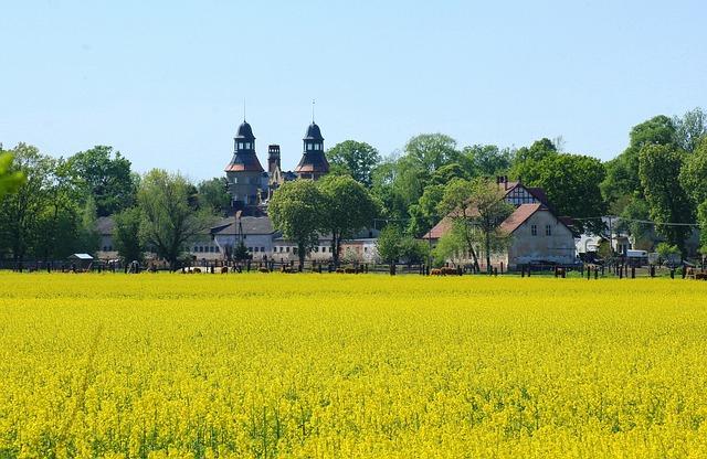 Landscape Rural, Canola Field, Field, Nature, Spring