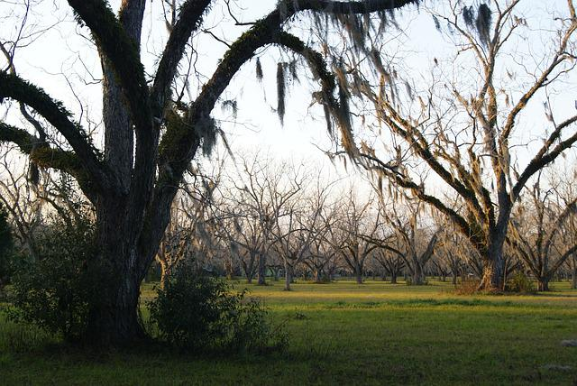 Moss, Trees, Field, Nature, Lichen, Natural, Outdoor