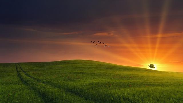 Field, Sunset, Light, Poppy, Summer, Nature, Clouds