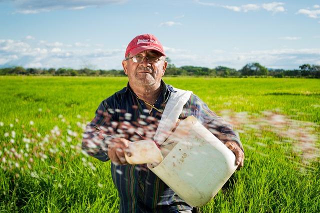 Man, Farmer, Rice Fields, Rice Crops, Colombia, Field