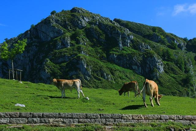 Cows, Livestock, Field, Mount, Asturias