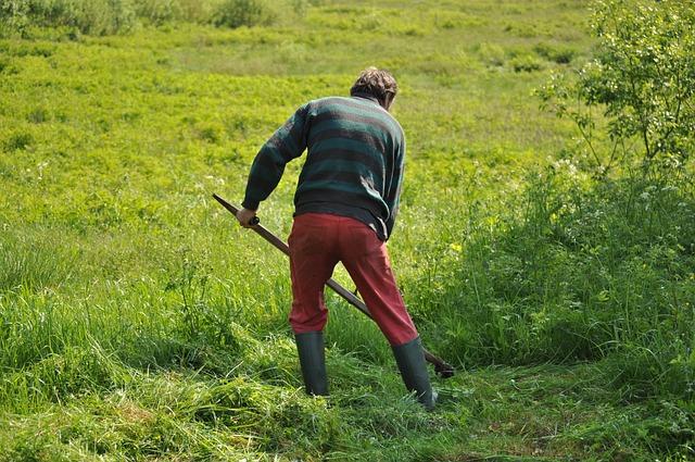 Mowing, Grass, Field, Green, Mower, Lawn, Lawnmower