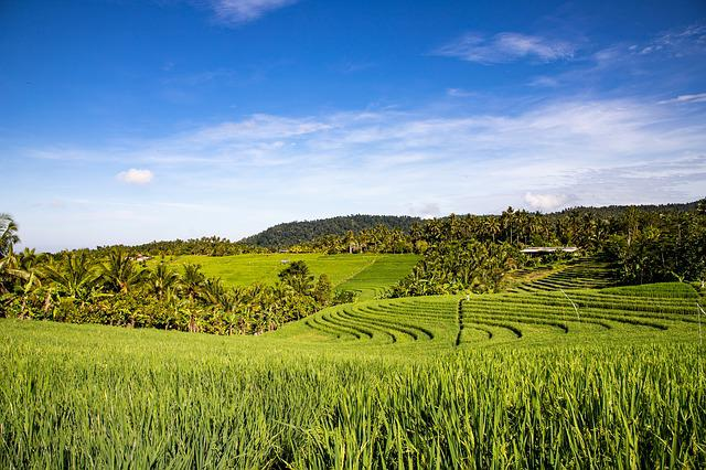 Field, Landscape, Agriculture, Panorama, Nature
