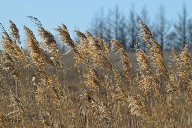 Grass, Prairie, Field, Nature, Brown, Canada