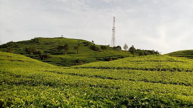 Agriculture, Nature, Field, Landscape, Farm