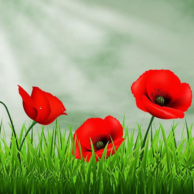 Lawn, Nature, Field, Henar, Garden, Flowers