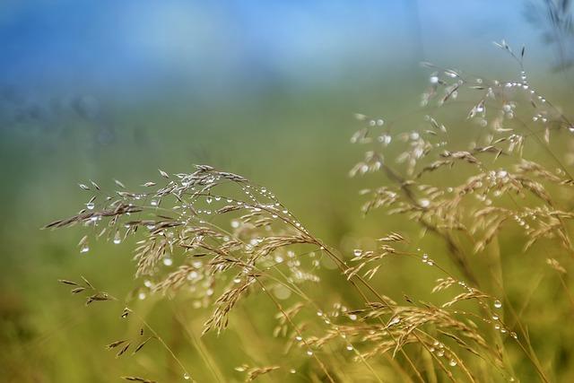 Nature, Field, Grass, Summer, Plant, Morgentau