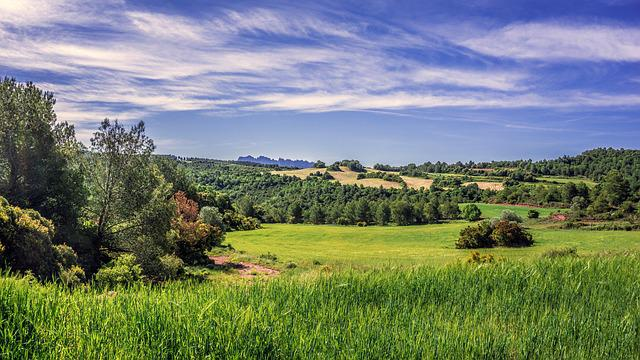 Rural Landscape, Field Of Cereals, Agriculture, Cereal