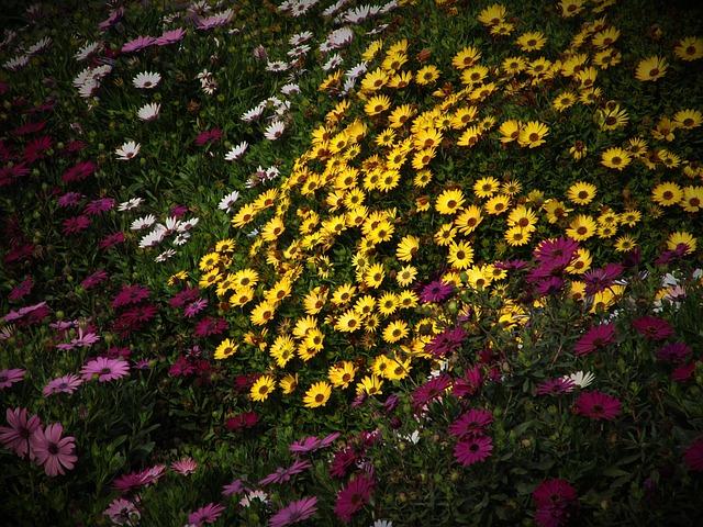 Flower, Flowers, Flowery, Field Of Flowers, Nature