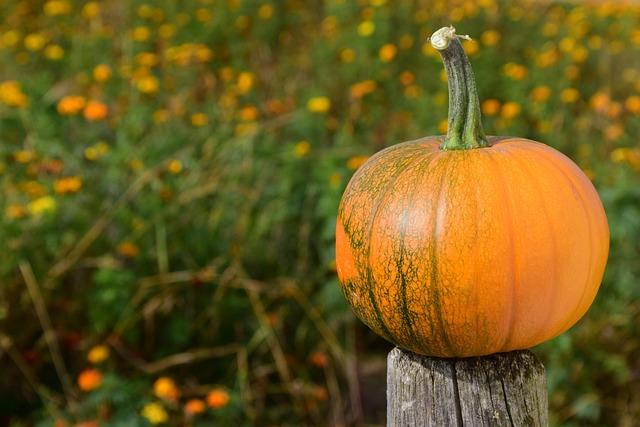 Pumpkin, Field Of Flowers, Orange, Autumn, Red, Yellow